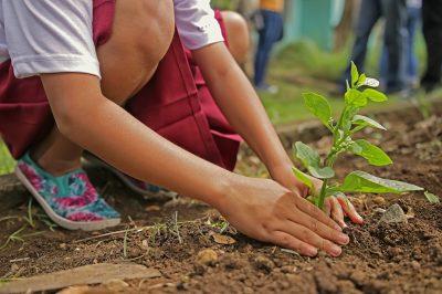 planting-1898946_1920